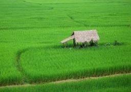 A Koku of Rice